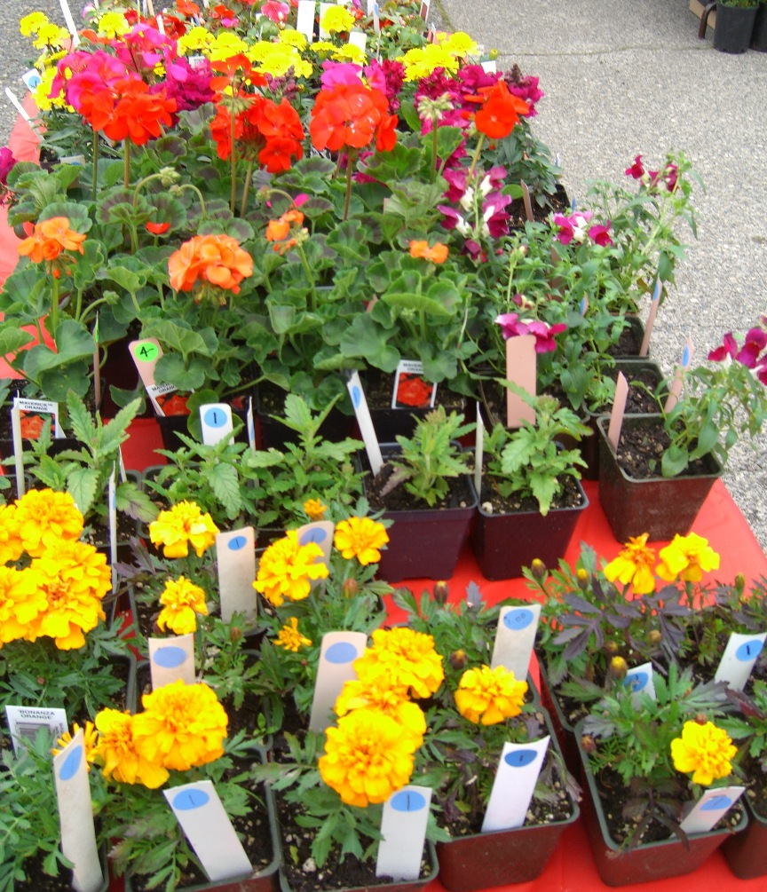 Garden flowers for sale plant sale rows of flowers for for Plants for sale